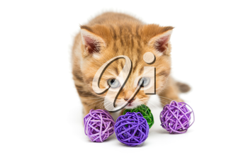Little orange kitten and colorful balls, isolated on white
