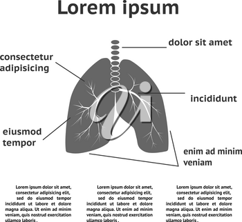 Lung structure infographic template. Can be used for medicine booklet