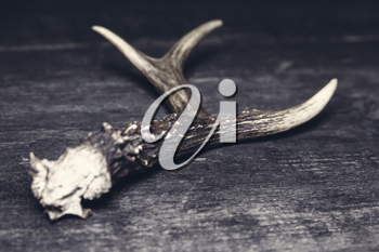 Deer Antlers Against Rustic Wooden Background