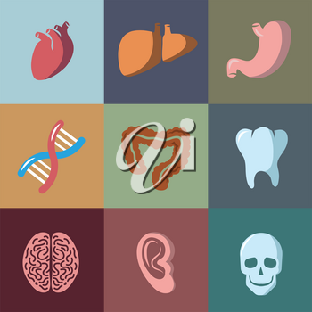 Internal human organs flat vector icons set. Anatomy organ, medical organ human, icon organ illustration