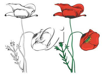 Black poppies silhouettes and colorful sample isolated on white background. Vector illustration