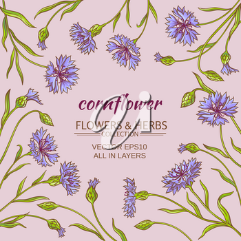 cornflower plant vector frame on color background