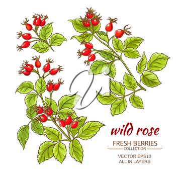 dog rose hips vector set on white background