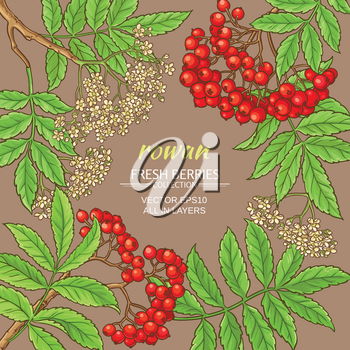 rowan branches vector frame on color background