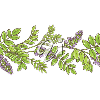 licorice plant vector pattern on white background