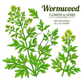 wormwood plant vector set on white background