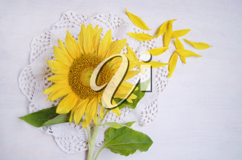 Close-up of beautiful yellow sunflower on white wooden background.Braided tablecloth in bocho style.