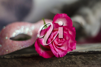 Pink rose in the shape of a heart on a blurred wooden background.Photo for in love, Valentin's day concept.