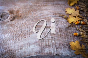 Thanksgiving background with oat, acorn and fall leaves on the old wooden background. Thanksgiving background with seasonal symbols.