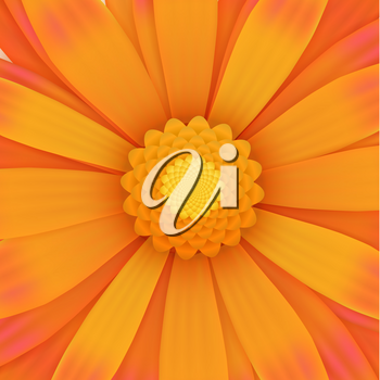 One orange gerbera flower, realistic square illustration