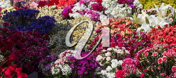 Blooming flowers make a floral background texture