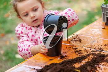 Closeup view of toddler child planting young beet seedling in to a fertile soil. In schools, children practice didactic botany workshops.