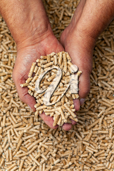 Alternative biofuel from sawdust wood pellets in hands.